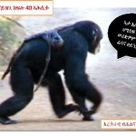 Monkey_Naizghi
