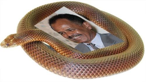 Isaias_snake_1