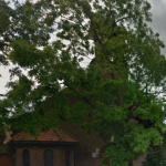 eritrean-orthodox-church